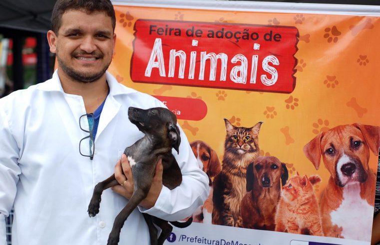 Animais para adoção em  Mesquita neste domingo