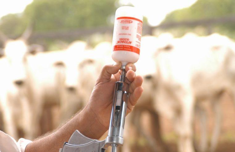 Campanha de imunização contra febre  aftosa é prorrogada no Estado do Rio