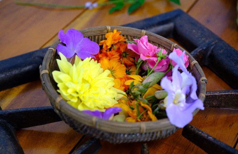 Prefeitura de Mangaratiba realiza curso  sobre Plantas Alimentícias Não Convencionais